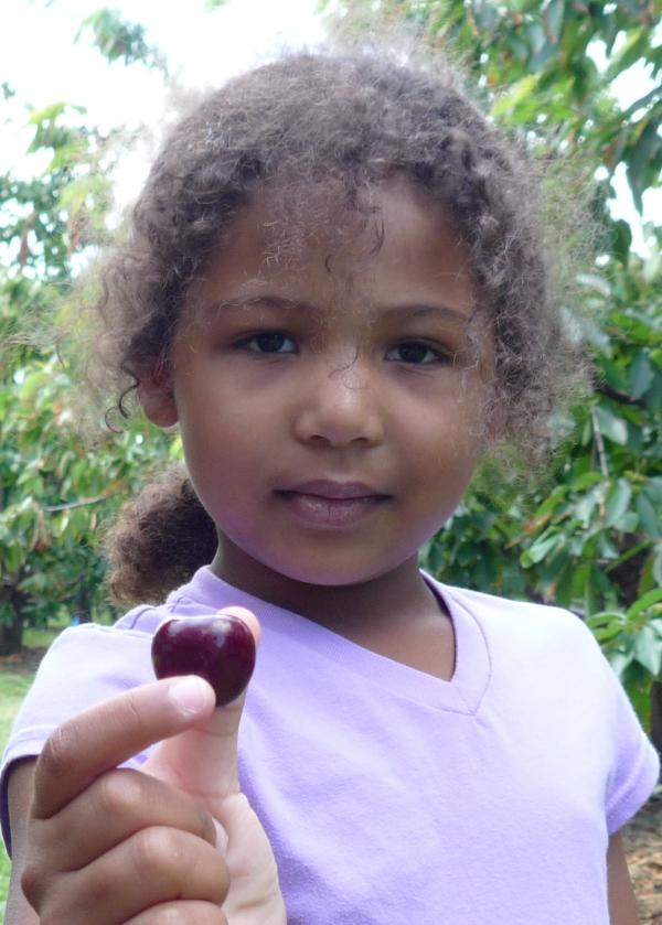 Cherry Lily