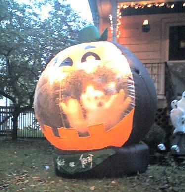 halloween-globe