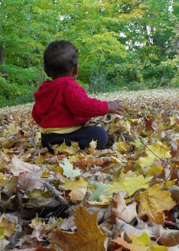 in leaves